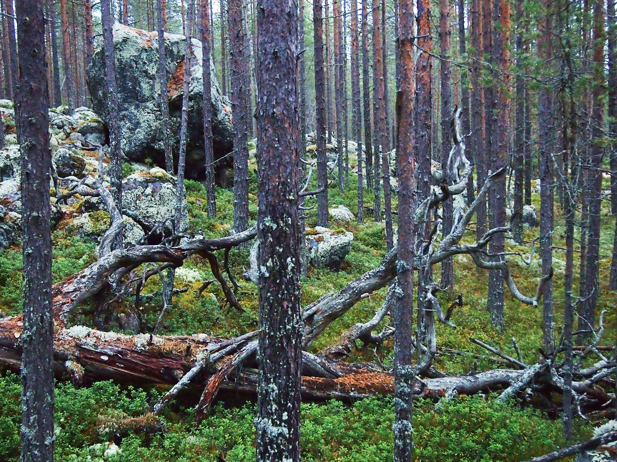 Расходы бюджета Карелии на охрану окружающей среды сократились в этом году на четверть. Фото: Валерий Поташов