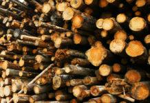 Лесозаготовители Карелии наращивают заготовку древесины и...убытки. Фото: mustoi.ru