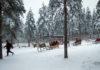 Лапландия остается одним из самых популярных направлений зимнего туризма. Фото: Валерий Поташов