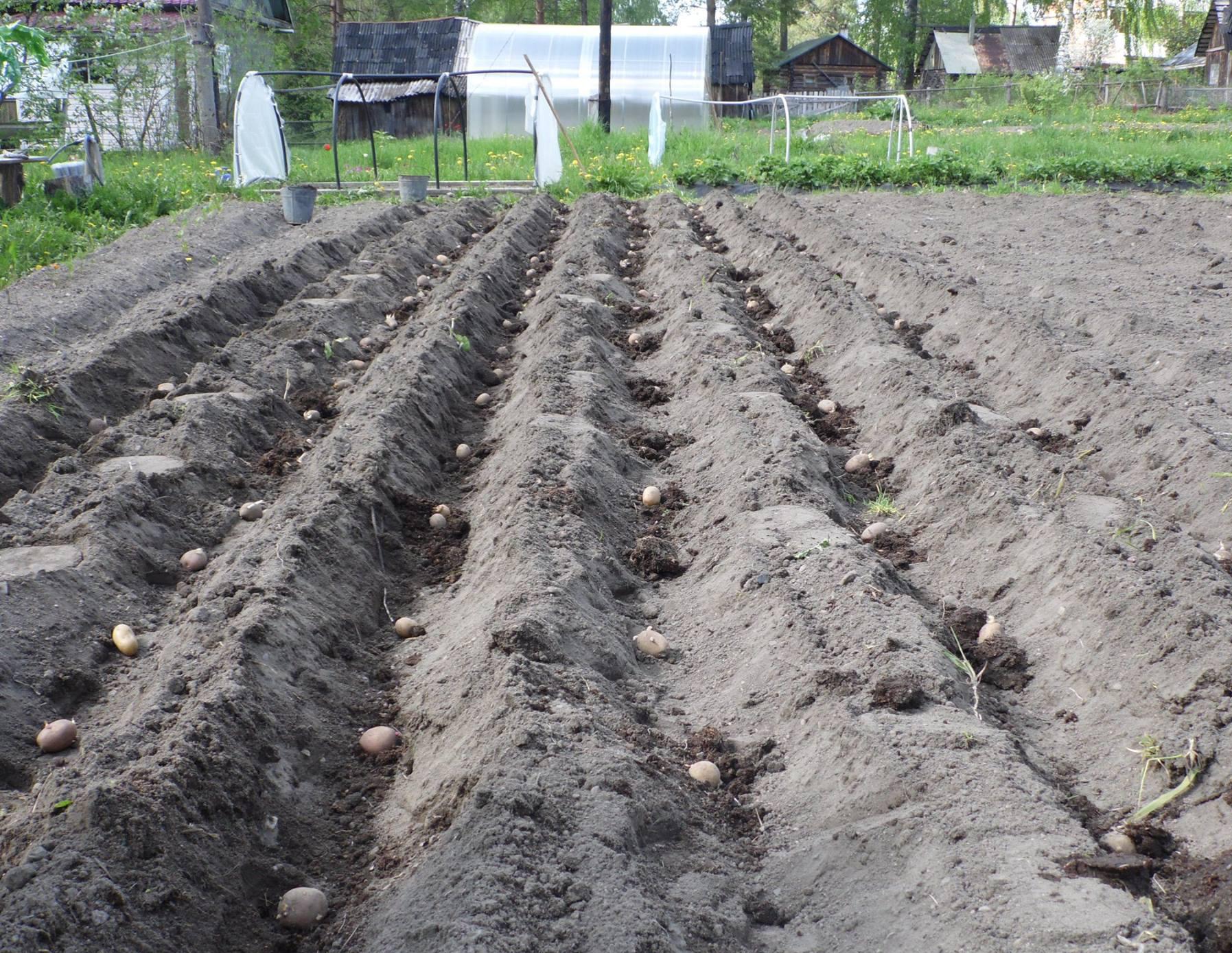 Карелию летом также ждет сельскохозяйственная перепись. Фото: Алексей Владимиров