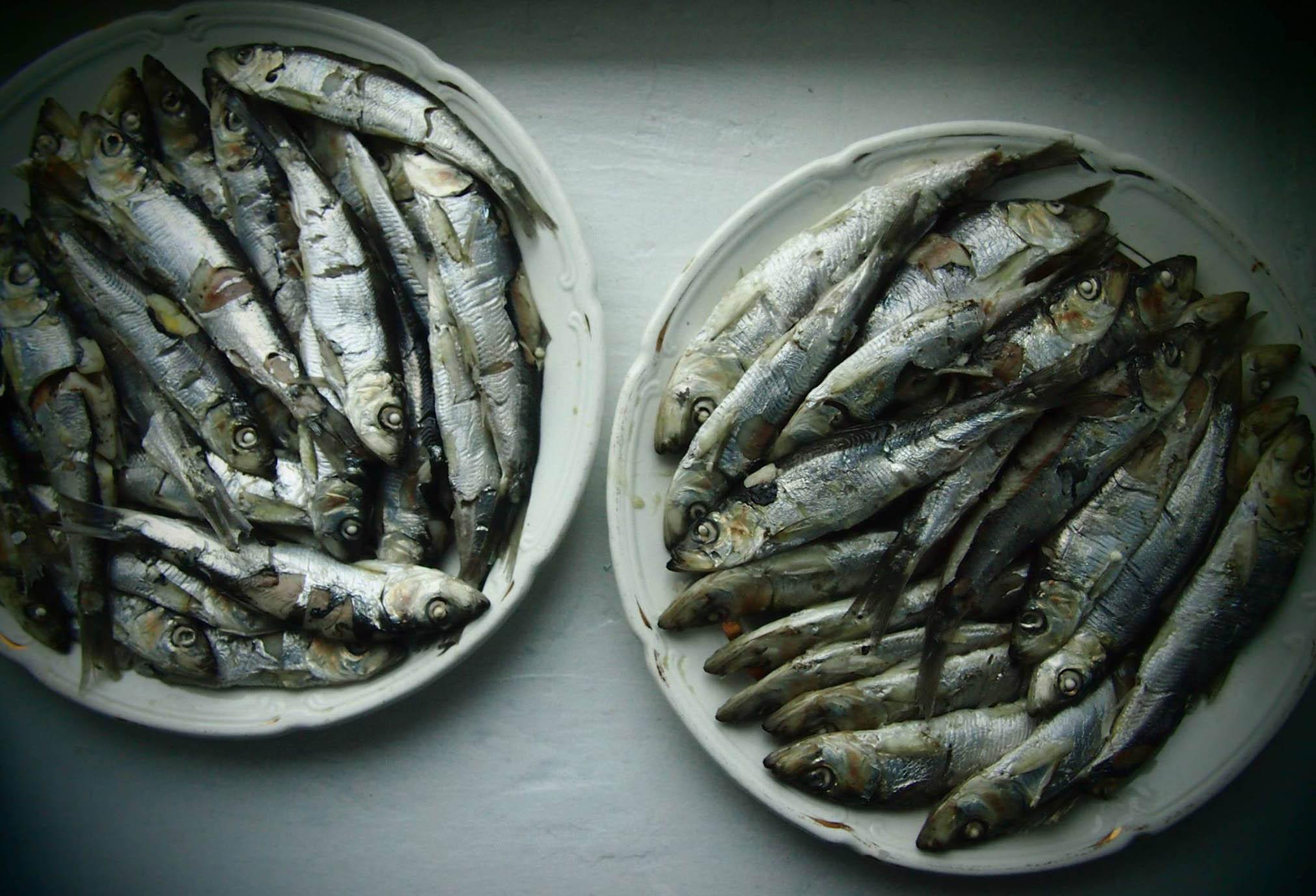 Карелия обеспечивает себя на 100% только рыбой. Фото: Валерий Поташов