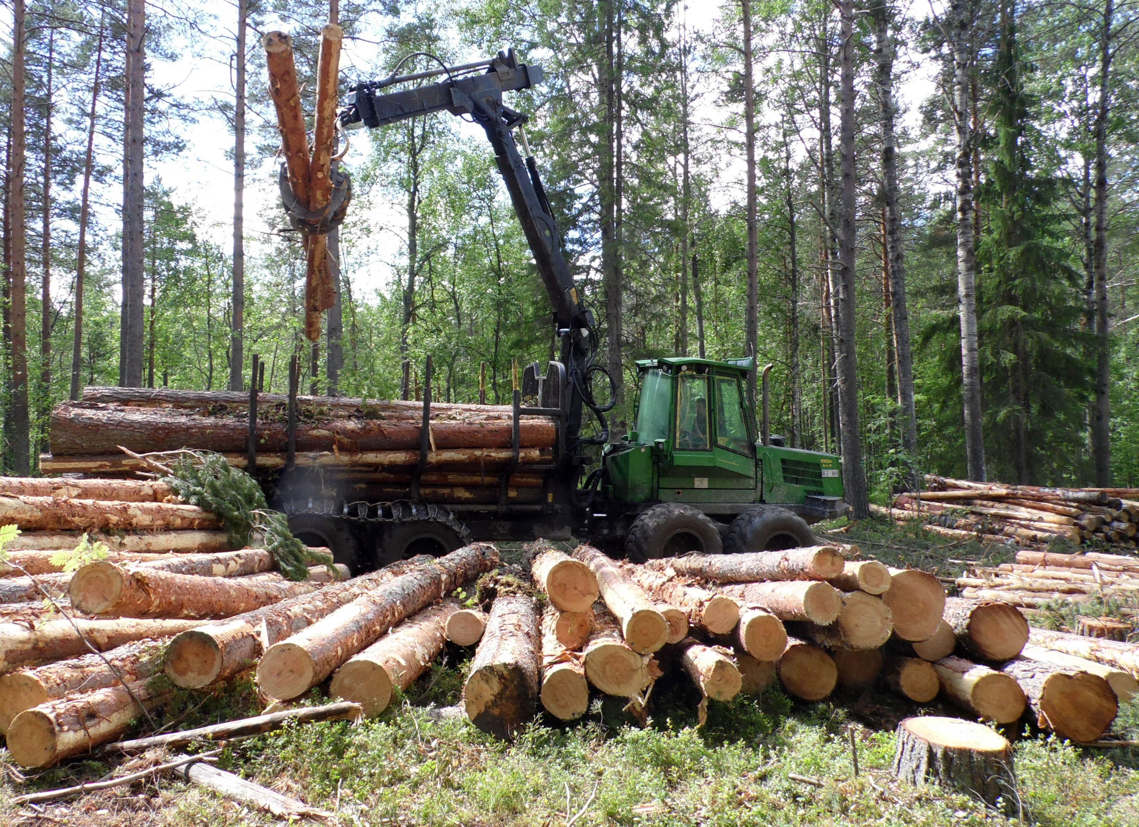 Форвардер убирает спиленный лес. Фото: Алексей Владимиров