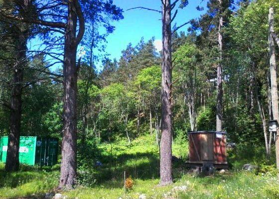 """Лесные земли в Северном Приладожье - """"лакомый кусочек"""". Фото: Общественный лесной совет поселка Тиурула"""