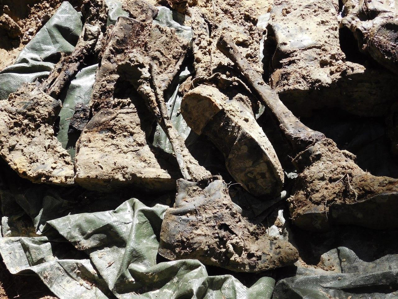 Незахороненными остаются еще тысячи солдат, погибших на карельской земле. Фото: Дарья Ряппиева