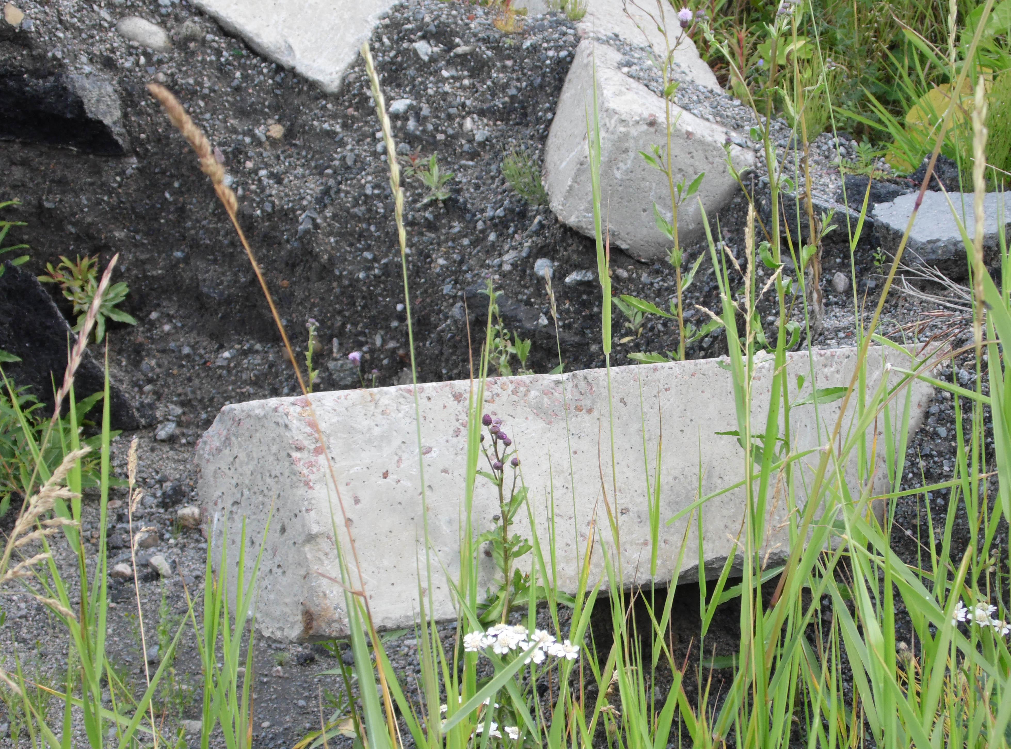 Кто свалил на Волчьей поляне старый асфальт и дорожный бордюр? Фото: Алексей Владимиров