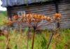 Карелия давно относится к вымирающим регионам, а в ближайшие 15 лет, по прогнозу Росстата, численность населения республики сократится более чем на 50 тысяч человек. Фото: Валерий Поташов
