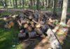 """В лесном массиве в петрозаводском микрорайоне """"Перевалка"""" идет рубка деревьев. Фото: Алексей Владимиров"""