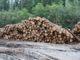 Карельские экологи обнаружили новую вырубку в местах концентрации краснокнижных видов, которые в республике никак не охраняются. Фото: СПОК