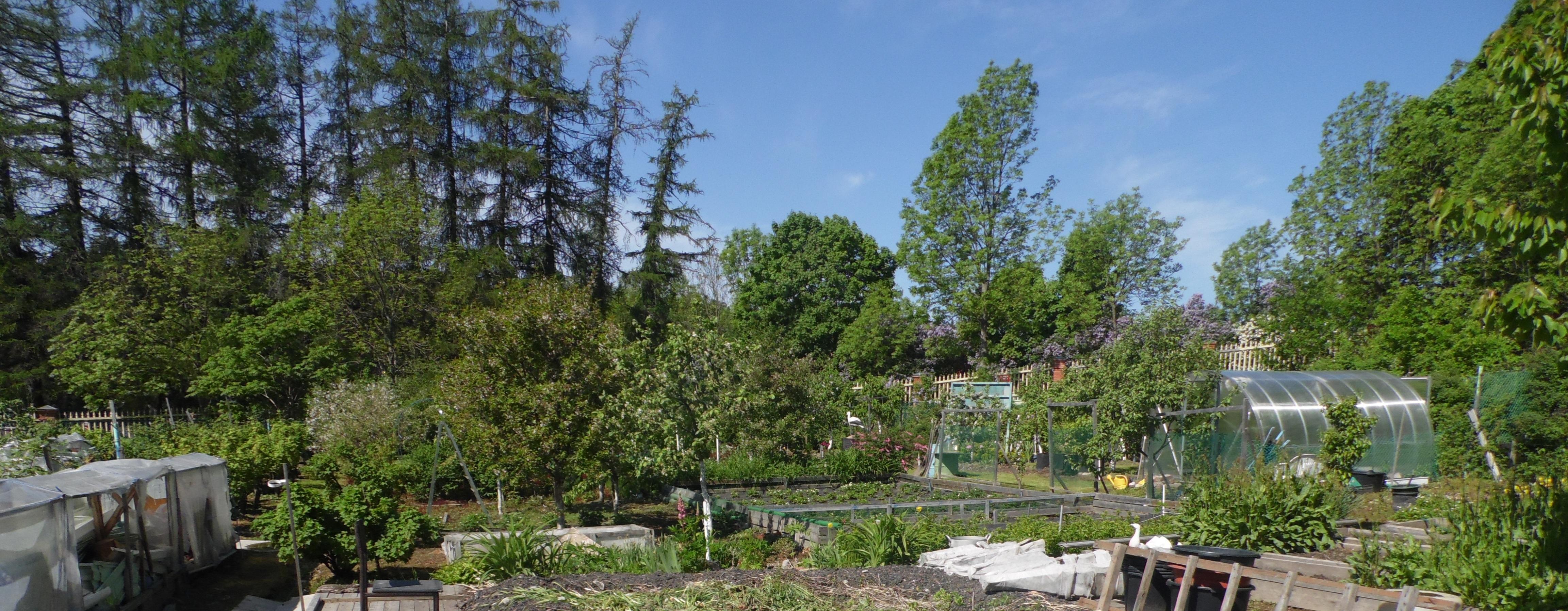 Удастся ли Сергею Григорьеву сохранить мемориальный сад? Фото: Алексей Владимиров