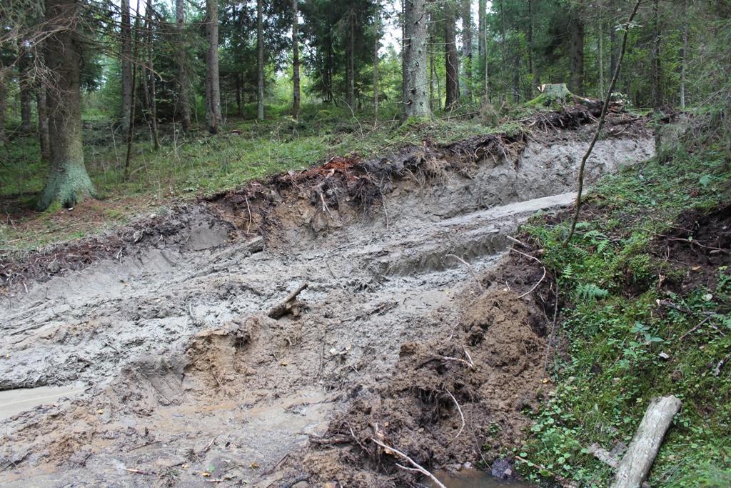 Такую картину увидели экологи в лесу, где был выявлен факт уничтожения краснокнижных видов. Фото: СПОК