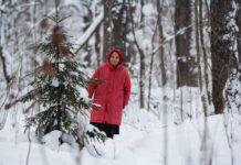 Защитница Сунского бора 80-летняя Нина Маккоева. Фото: Игорь Подгорный