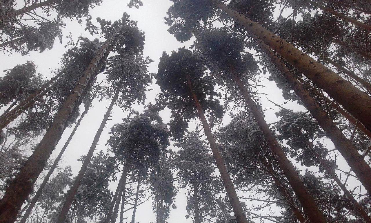 Сунский бор. Фото: Вера Мушникова