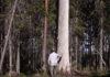 Кадр из документального фильма о малонарушенных таежных лесах, снятого в Карелии. Фото: Youtube