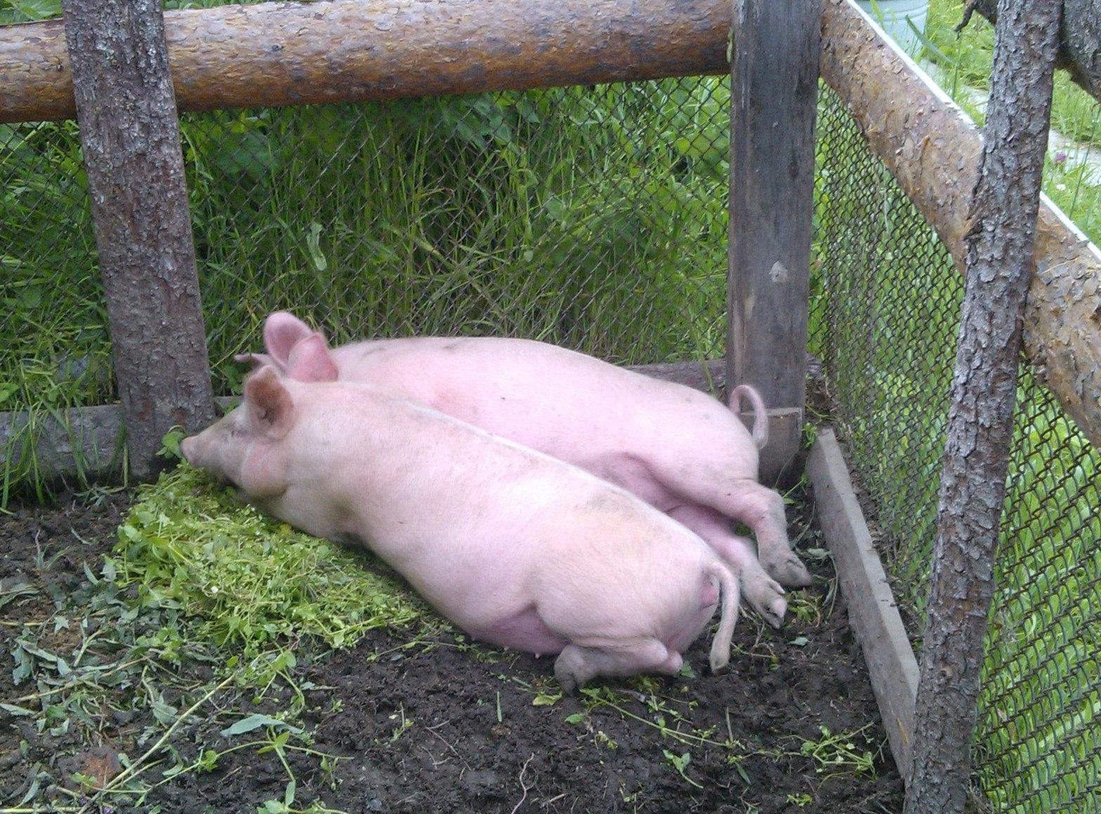 Ферма предпринимателя не станет прибыльной за год. Фото: Андрей Туоми