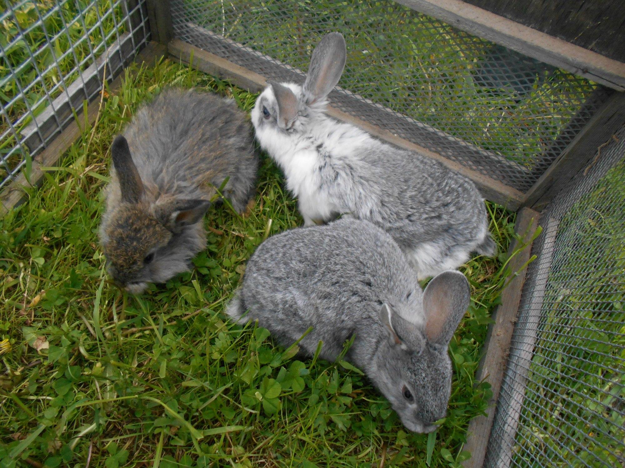 Кролиководство - один из видов малозатратного сельскохозяйственного бизнеса. Фото: Андрей Туоми