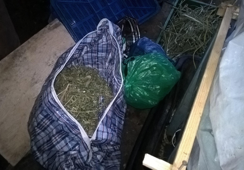 Изъятая марихуана. Фото: пресс-служба МВД Карелии