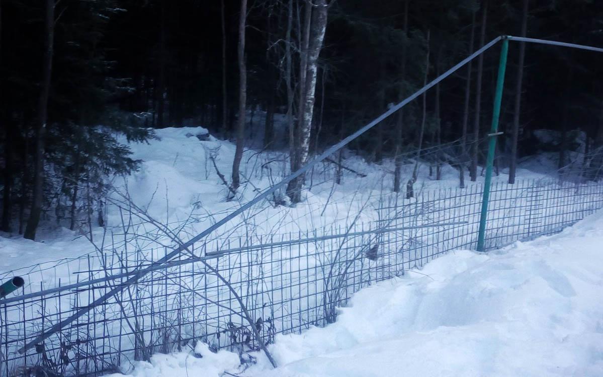 Много напилить экоактивисты не успели. Фото: openbereg.ru
