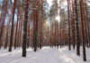 В Сунском бору. Фото: Валерий Поташов