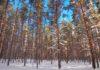 Сунский бор. Фото: Валерий Поташов