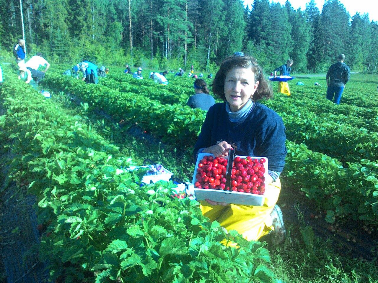 Зульфия Шевченко на сборе клубники в Финляндии. Фото из личного архива