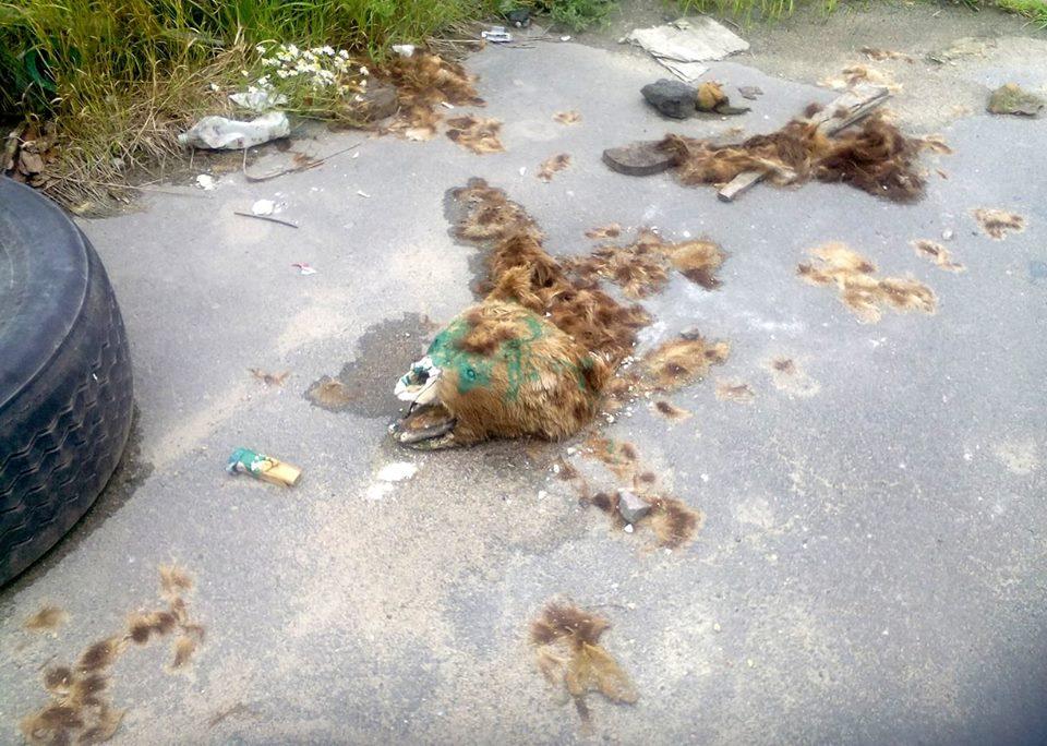 Незаконная свалка в районе Сулажгоры. Фото: Татьяна Данильева