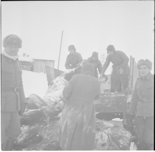 Медвежьегорск. 1942 г. Военнопленные разгружают убитых на передовой лошадей для кухни лагеря